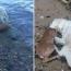 Собака по кличке Шторм спасла тонущего оленя