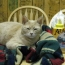На Аляске умер кот Стаббс, занимавший пост мэра 20 лет