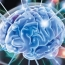 Brain's stem cells slow ageing in mice: study