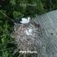 The Smithsonian: Armenian villagers monitor storks' breeding process