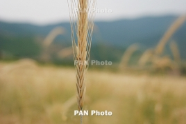 Global warming reduces protein in key crops, study finds