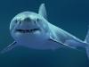 Поблизости пляжей Хургады заметили белых акул