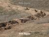 220 ceasefire violations by Azerbaijan registered over past week