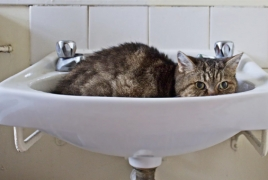 Ig Nobel prize: Cats can be considered solid and liquid at the same time