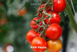New EU deal 'will boost export of Armenian agricultural produce'
