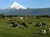Նորզելանդական կովերն ընդդեմ հայկական սառնարանների․ Ինչու և ինչքան է կարագի գինը բարձրանում