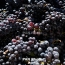 Mobile 'Wine Cubes' could transform Armenia's enotourism: Smithsonian
