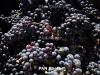 Ֆրանսիական հեռուստատեսությունը ցուցադրել է «Հայաստան. Նոյի խաղողի այգիները» ֆիլմը