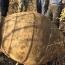 Մալաթիայում գյուղացին 2000 տարվա կարաս է գտել