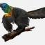 Ученые обнаружили новый вид динозавров с радужным оперением
