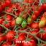 Փետրվարի 16-ի դրությամբ ՀՀ-ից արտահանվել է մոտ 10 տ թարմ պտուղ-բանջարեղեն