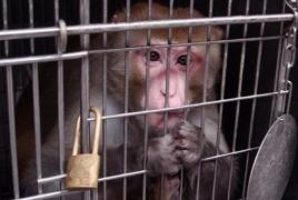 Ռոստով ՀՀ-ից ապօրինաբար կապիկներ են ներկրել․ Նրանց մահ է սպառնում