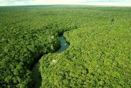 Исследование: К 2080 году исчезнут 50% видов растений и животных в ряде регионов