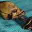 Scientists solve 'alien skeleton' mystery
