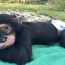 A Miami chimp has its own Instagram account