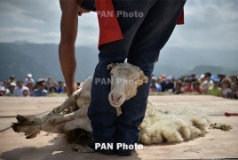 British shearers will participate in Armenia sheep shearing festival