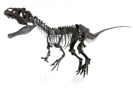 150-million-year-old mystery dinosaur fossil auctions for $2.3 mln