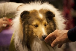 Canada researchers dogs help patients with chronic pain