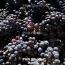 Грузия планирует вырастить на Марсе виноградную лозу