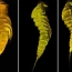 Iran researchers discover 3 new species in Persian Gulf, Sea of Oman