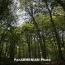 Հայաստանում նախատեսվում է 4700 հեկտար անտառ տնկել