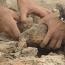 В Азове при раскопках нашли чаши с армянскими надписями