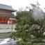 Число жертв землетрясения на японском Хоккайдо превысило 20 человек