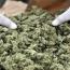 70-year-old Armenian man grew cannabis in drip irrigation hothouse