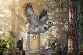 New species of dinosaur-era bird discovered in China