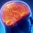 Researchers pinpoint location of brain's speedometer