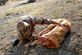 Azerbaijani troops shoot a dog at Armenian post in Karabakh