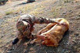Ադրբեջանցիները խախտել են հրադադարը՝ վիրավորելով հայկական դիտակետի շանը