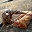 Azerbaijani troops shoot a dog at Armenian post in Karabakh