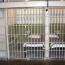 Համաներմամբ արդեն ազատ է արձակվել 330 դատապարտյալ