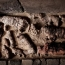 Mummified cats and other animals found in Egypt