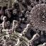 В Армении еще один человек умер от свиного гриппа