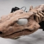 290 million-year-old giant lizard reconstructed as a robot