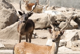 Researchers claim to have found cure for deadly deer and elk disease