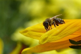 Bees can do basic math, scientists say