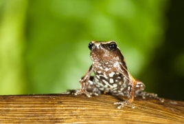 New 'mysterious' frog species discovered in India