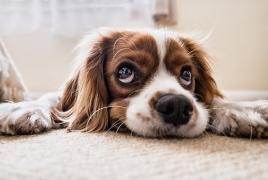 Мэр города на севере Франции запретил собакам лаять