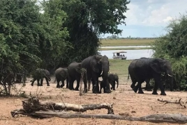 African elephants develop new mechanisms for migrating to safety