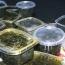 Azerbaijani ambassador to UAE sacked for stealing caviar