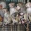 Կենդանաբանական այգում կապիկ է ծնվել