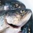 В Шереметьево задержали более полутонны охлажденной рыбы из Армении