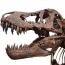 Scientists identify biggest Tyrannosaurus rex ever discovered