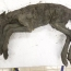 40,000-year-old preserved paleolithic baby horse discovered in Russia