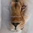 Giant prehistoric lion fossil discovered hiding in museum drawer