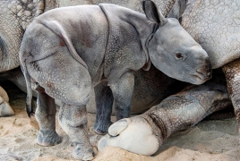 Rare rhino born by artificial insemination for first time ever
