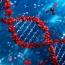 Scientists insert human brain gene into monkeys